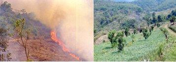 terrestrial-ecosystems-management1